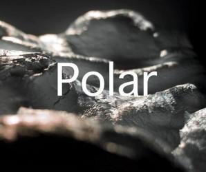 Joy - Polar